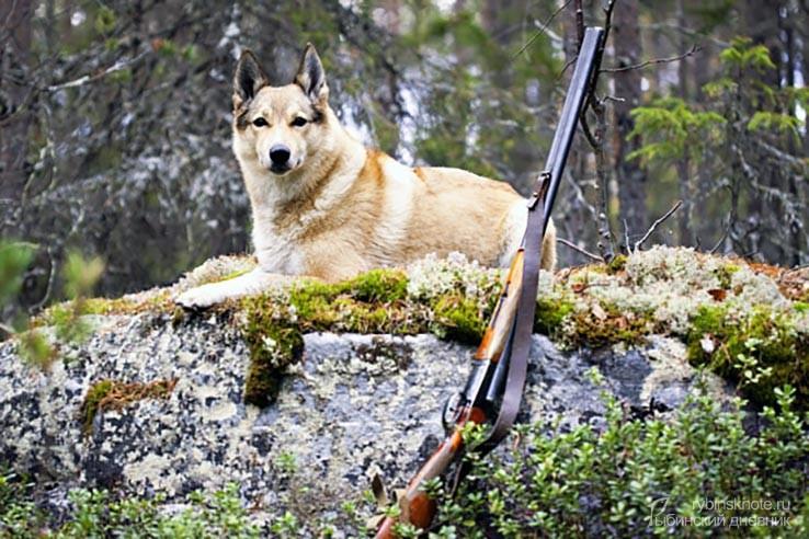 Собачка с ружьем