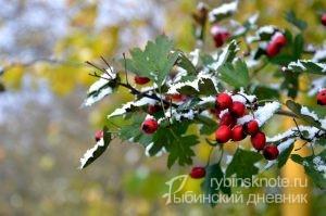 Первые предсказания синоптиков о зиме в Рыбинске