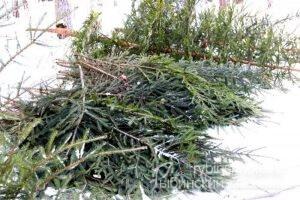 вырубили елки