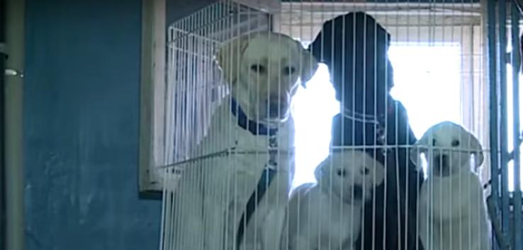 Спасли собак